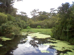 A small lake at the end of the Kirby Walkway