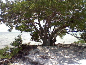 Anne's Beach in the Florida Keys