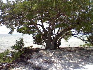 Anne's Beach in the Florida Keys